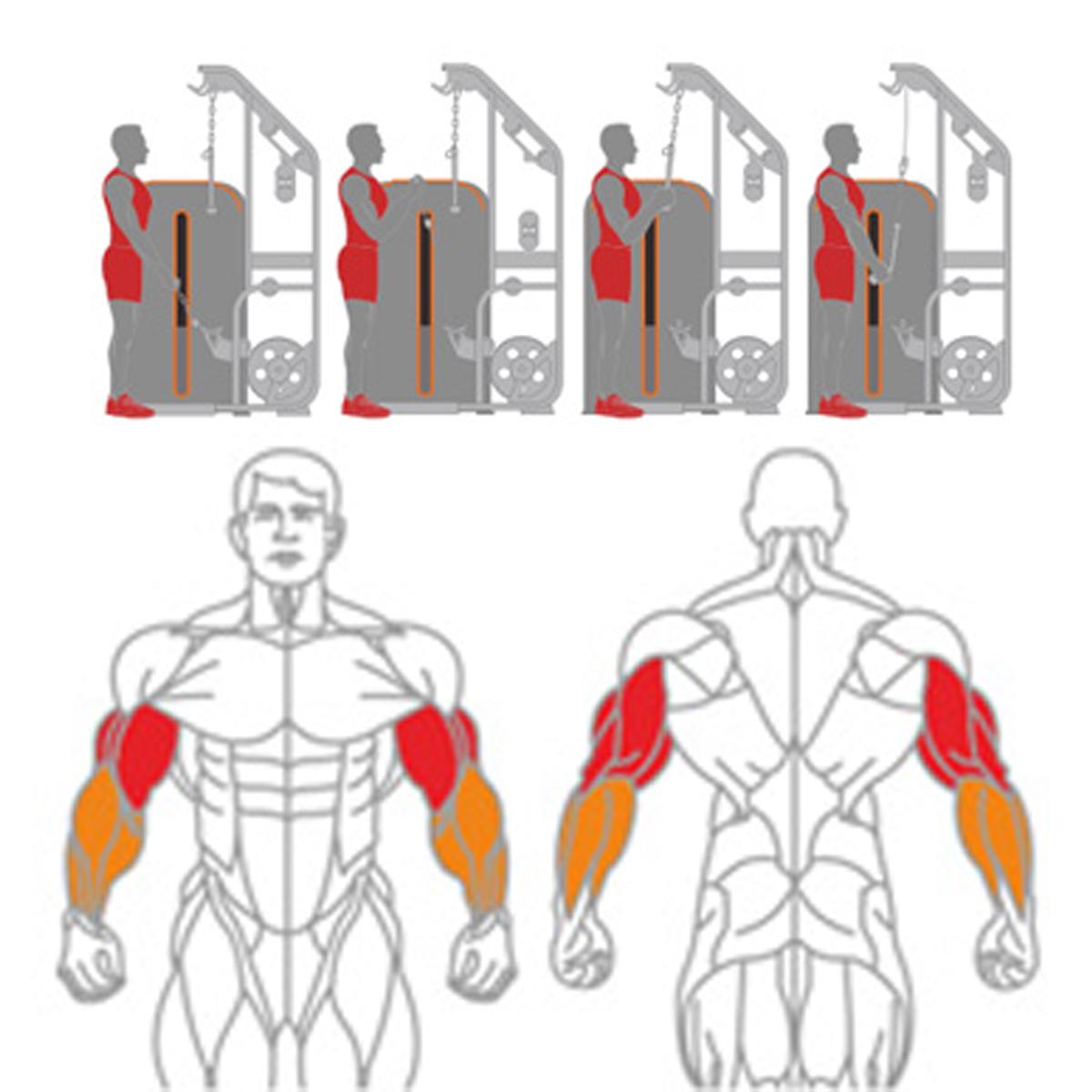 Biceps & Triceps